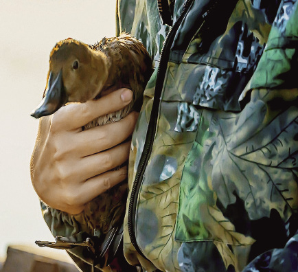Kurgan Region is considered a hunter's paradise. Hunting for fowl is particularly attractive due to the wide variety and bountiful stocks of wood grouse, geese, ducks, and black grouse.