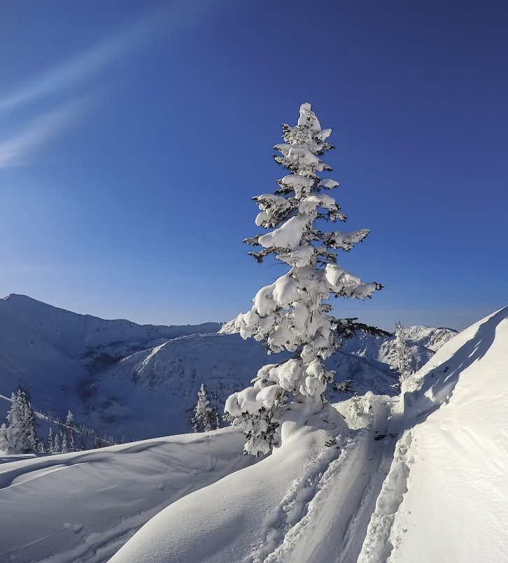 Cherskiy Peak is rich in plant life and natural beauty.